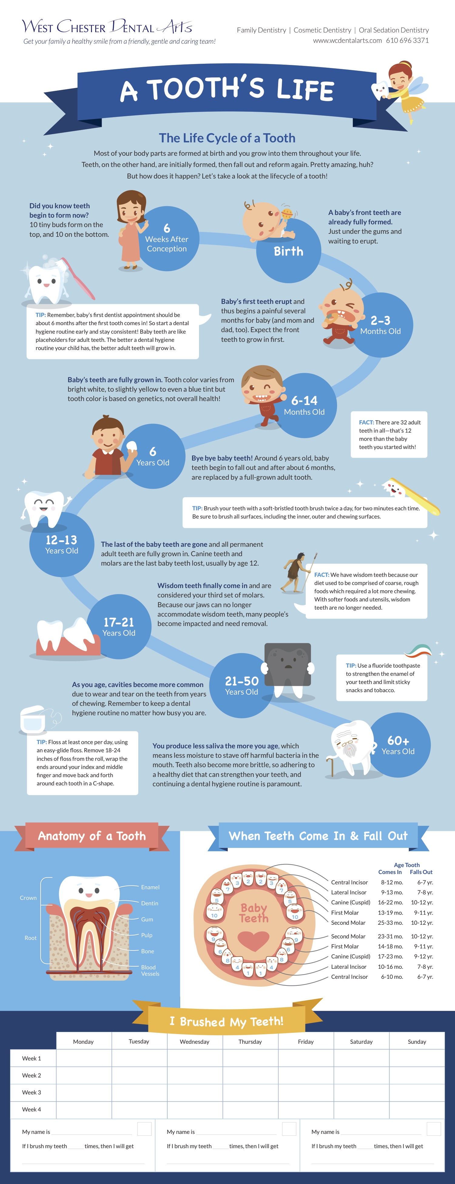 WCDA-Tooth-Lifecycle-Poster.jpg