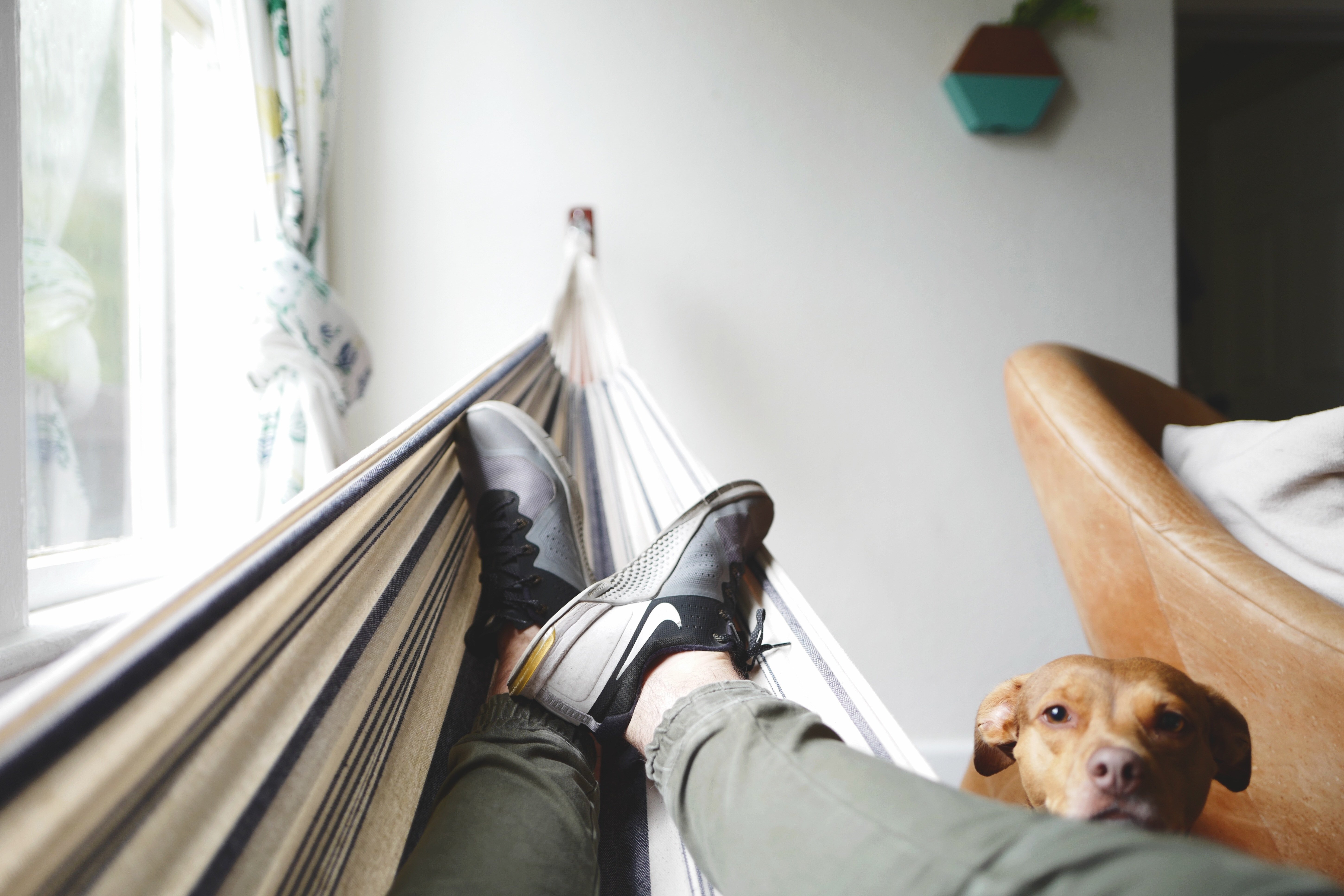 man in hammock with dog
